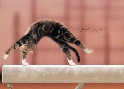 عکس گربه آکروبات کار